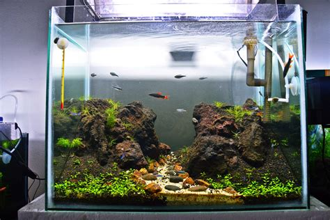 Batu Aquascape Lava Hitam Aquarium aquascape purwokerto aquascape purwokerto indoaquatic