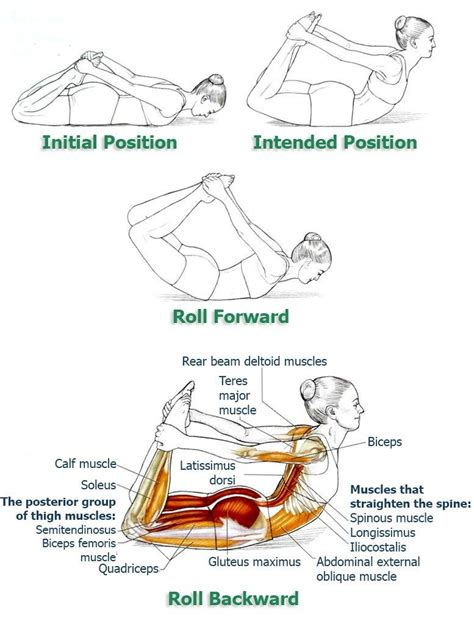 best 25 sitting posture ideas on posture correction exercises stomach stretches