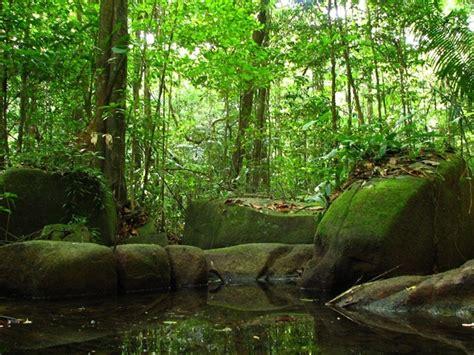 por una gentil floresta 8426374646 lenin cardozo entrevistas art 237 culos videos flora de la selva amaz 243 nica
