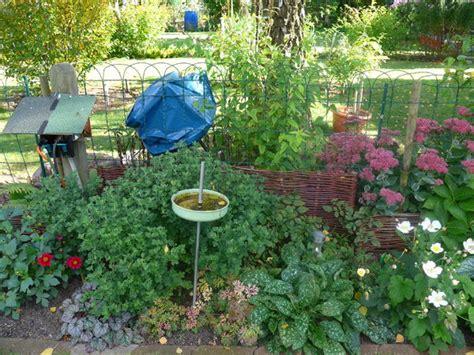 garten forum sichtschutz pflanze gegen m 252 llsack in blau mein