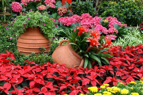 un jardin de rosas rojas las flores del jard 237 n