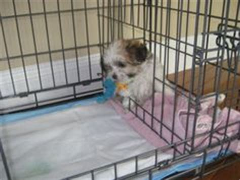 puppy apartment reviews puppy apartment reviews on
