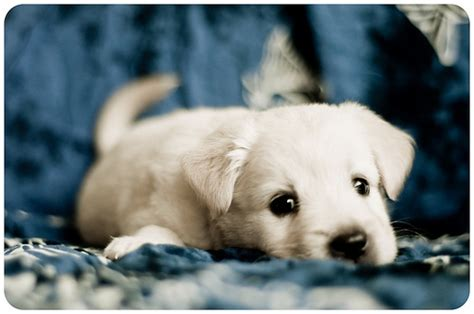 sweet puppies dogs images sweet puppies wallpaper and background photos 21180246