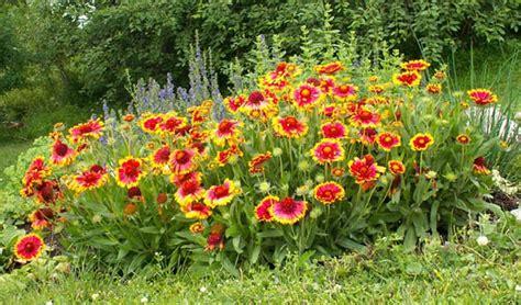 Tahan Panas Corak Dan Warna Random 24 jenis tanaman hias tahan panas matahari