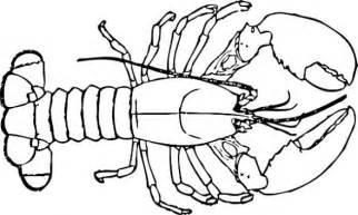 lobster outline coral lobster clip art at vector clip art
