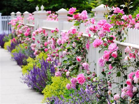 How To Add Curb Appeal to Your Yard   HGTV