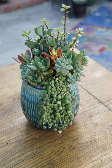 succulent arrangements gardening tips for beginners growing succulents