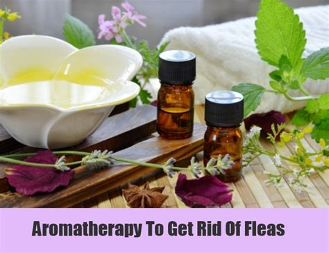 11 home remedies for fleas treatments cures