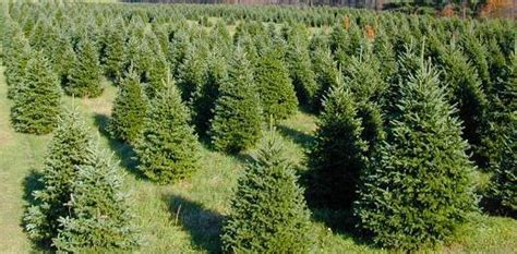 tree farm cory indiana best greetings