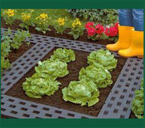 Organizing Your Vegetable Garden Choosing The Veg How To Arrange A Vegetable Garden