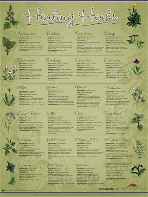 herb chart healing herbs wall chart prepper pinterest