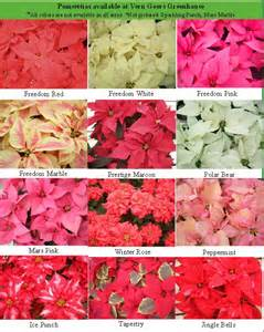 poinsettia colors gift guide winter floral class auto show