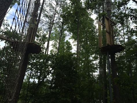 go ape tarzan swing 38 obstacles picture of go ape treetop adventure course