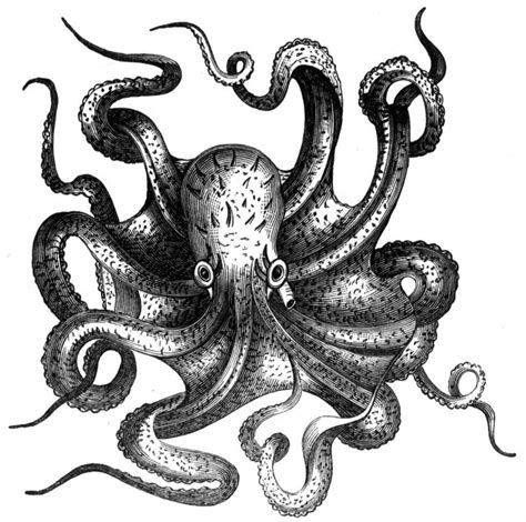 Octopus Black And White Drawing