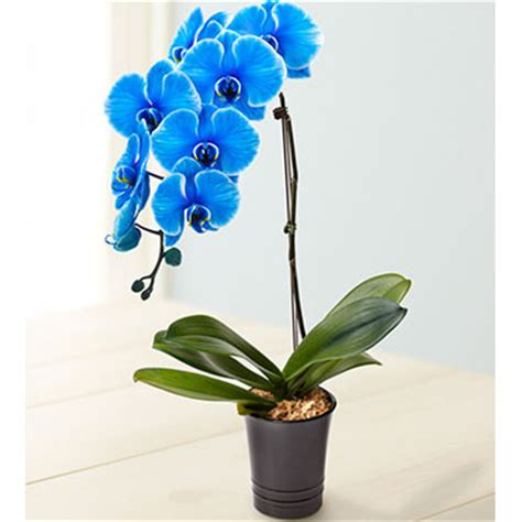 1800flowers coupon 30% off birth day plants