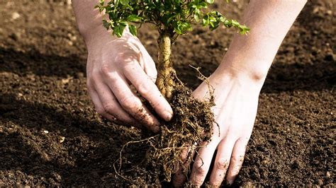 tree to plant tree planting at arborday org