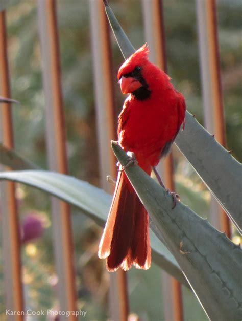 birds arizona bird watcher