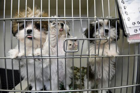 puppy mill laws move by usda to animal welfare data undermines maryland puppy mill