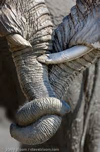 the elephant with a knot in his trunk books the world s catalog of ideas