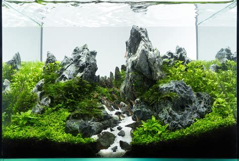 aquascape tank planted tank peaks by roman holba aquarium design contest aquascape awards
