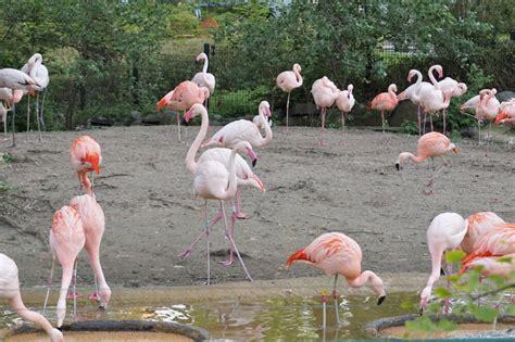 Tchibo Zoologischer Garten Berlin by City Mit Kleinkind Mit Diesen Tipps Machen St 228 Dtereisen