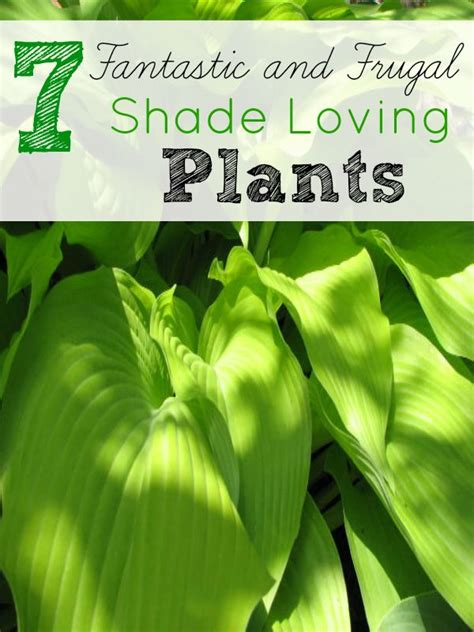 shade loving foliage plants 7 frugal shade loving plants frugal yards and budget