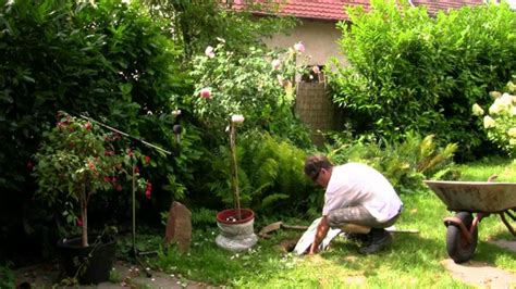 Welche Rosensorten Gibt Es 3544 by Englische Ein Visueller Genuss Im Garten