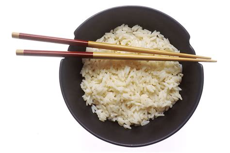 white rice for dogs six foods to feed your when he s sick
