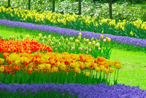 imagenes tulipanes naturales los mejores paisajes de flores teleaire multimedia