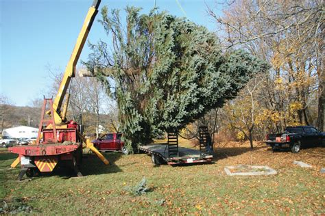 christmas tree has some deep natick roots warwick beacon