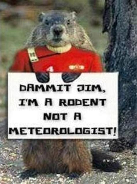 groundhog day jokes 17 best images about groundhog day on