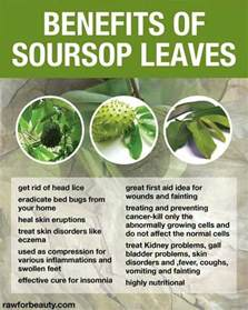 Fruit Of The Graviola Tree - benefits of soursop leaves the health benefits of non animal ingredients pinterest juice