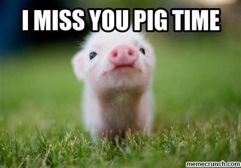 Funny Miss You Meme - i miss you pig time