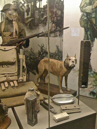 Sergeant Stubby Museum Best 25 Sergeant Stubby Ideas On Pitbull Wiki Who Fought In Ww1 And War Dogs