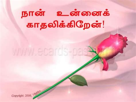 images of love in tamil cat cats cat names cat pictures feline paradise i