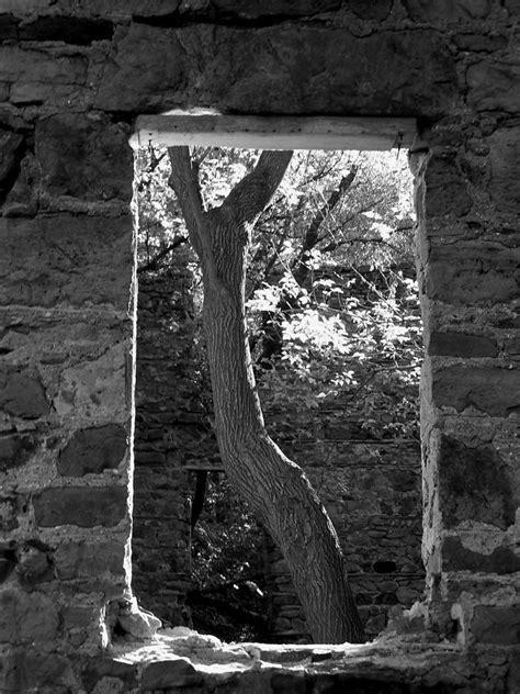 Corrine Elizabeth Bags tree of photograph by corinne elizabeth cowherd