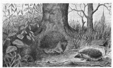 nakedness whence books hedgehog erinaceus europaeus