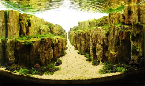 Aquascape Aquarium by How To Create Your Aquascape Aquascaping