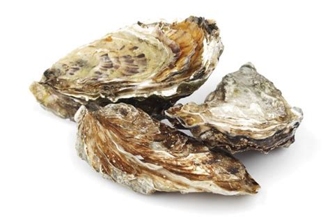 oyster shell oyster shell filled pp makes waves in developing new
