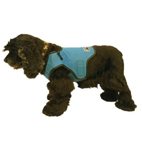 cooling vest for dogs 10 more products to keep your pets cool