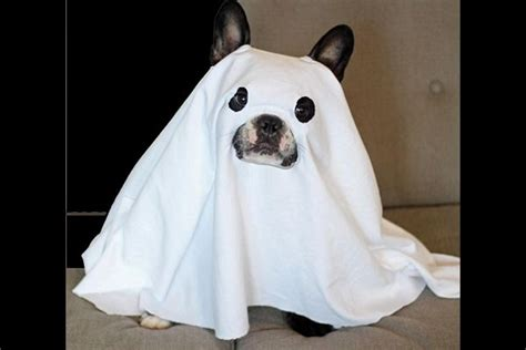 how far can dogs see only best 25 ideas about can dogs see ghosts on ghost mummy