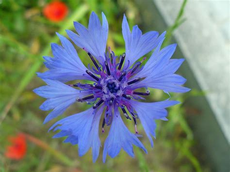 garten gestalten wildblumen blumen im garten bestimmen siddhimind info