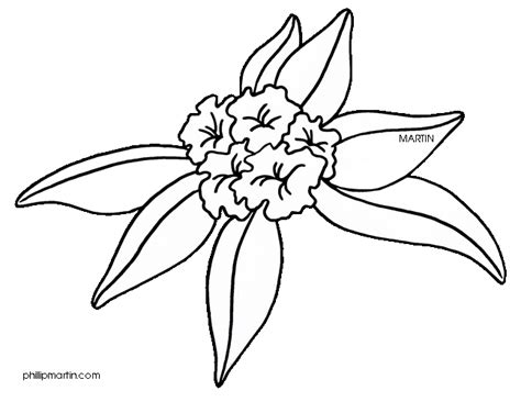 rhododendron coloring page coloring pages