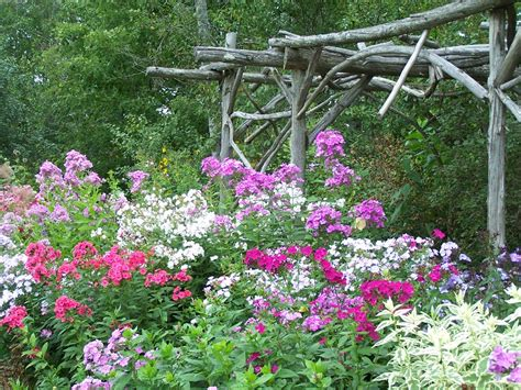 All About Phlox Perennial Pleasures Nursery Buy Garden Flowers
