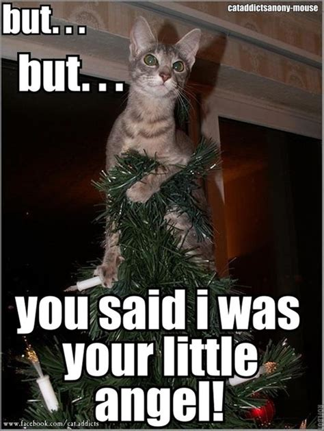 Cat Christmas Tree Meme - funny christmas cat memes