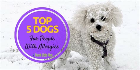 best shoo for dogs with allergies top 5 dogs for with allergies your mind school