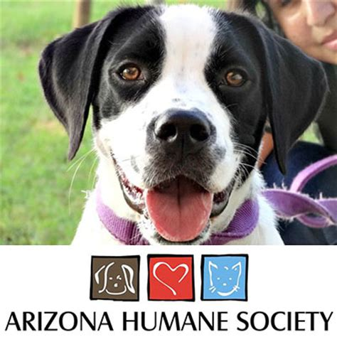 arizona humane society dogs arizona humane society charity fundraiser in sun city arizona 11 21 15
