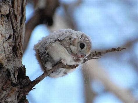 Cool Bird House Plans by Cutest Baby Animals Of All Time