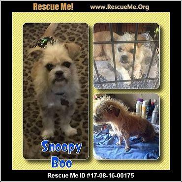 adoption houston tx k 9 rescue houston tx rescue animals autos post