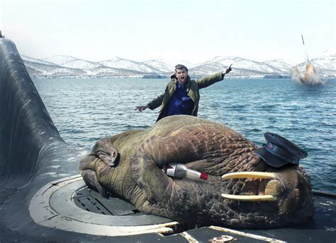 why does my sleep on top of me psbattle sleeping walrus on top of a russian submarine rebrn